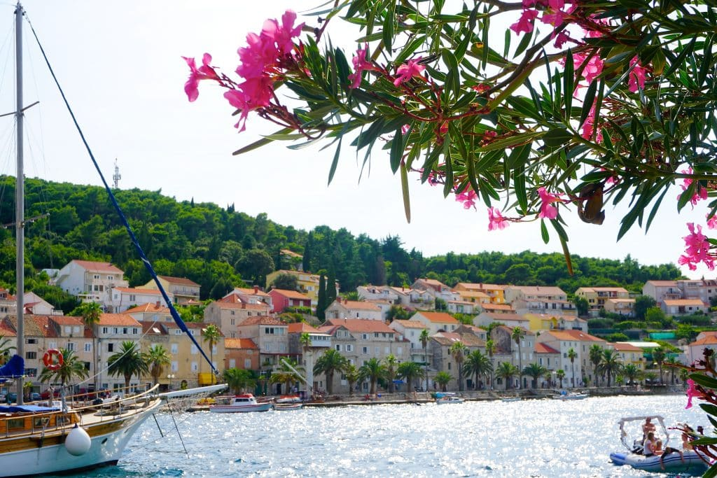 Island of Korcula near Dubrovnik Croatia, featuring flowers and coastal beach. Korcula is one of the most popular Dubrovnik day trips