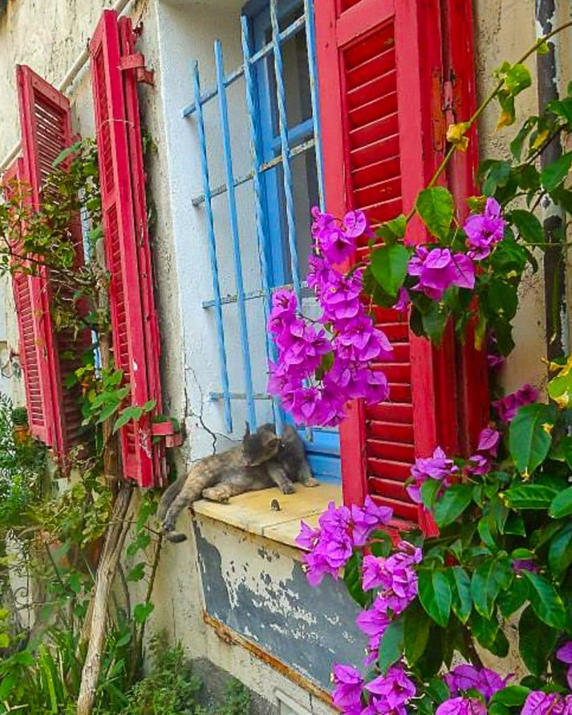 antibes colorful shutters and flowers in the window