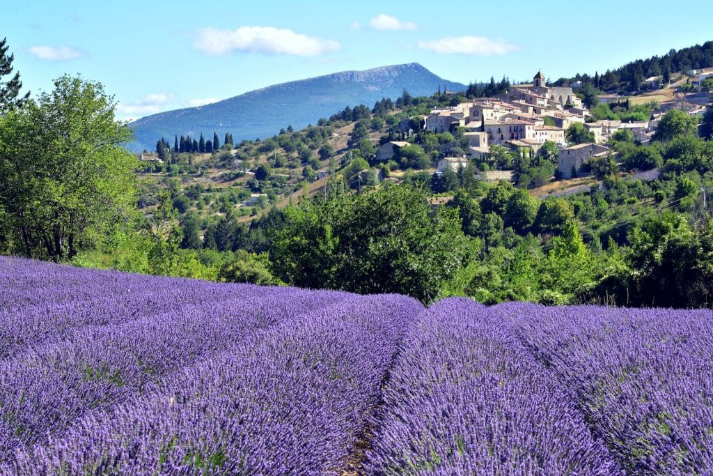 Lavender fields in the Provence region, overlooking vineyards and small villages.