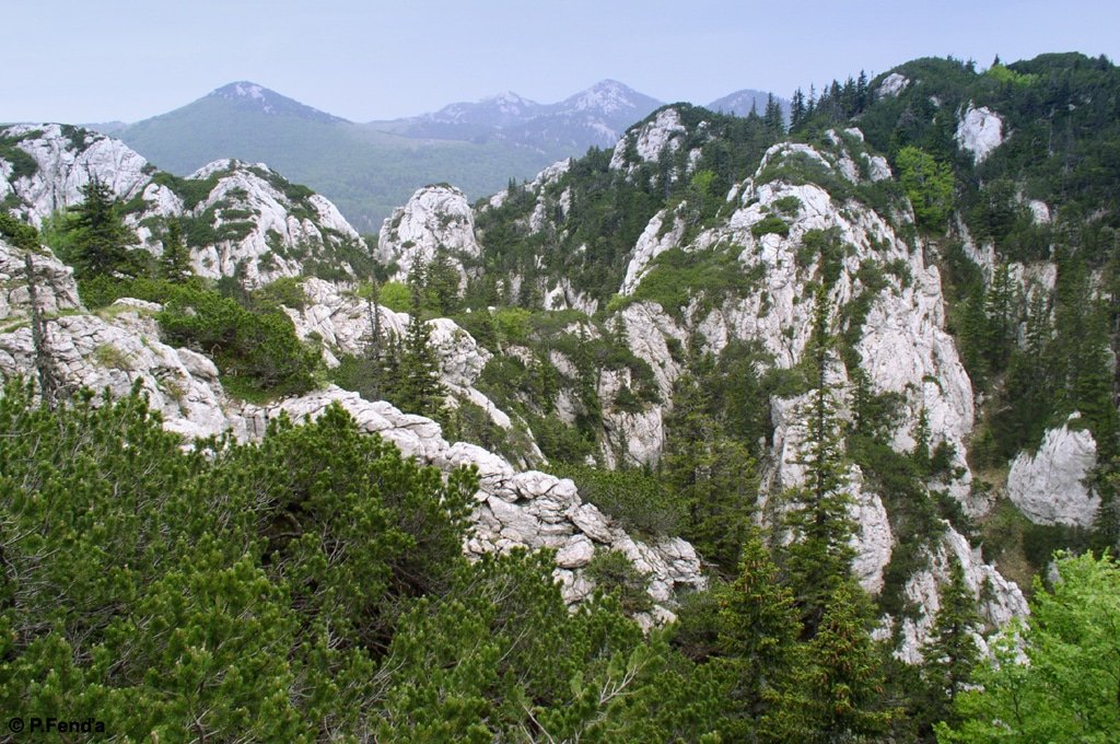 Velebit national park mountains with limestone and pines. Facts about Croatia